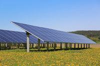 Solar Panels on Field of Flowers
