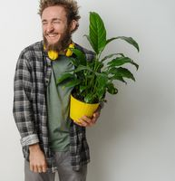 Handsome smiling young bearded man holding yellow flower pot with plant dressed in plaid shirt and yellow headphones on his neck isolated on white background. Moving concept