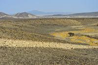 Aride Landschaft mit Baum unter dem Meeresspiegel, Danakil Depression, Afar Region, Äthiopien