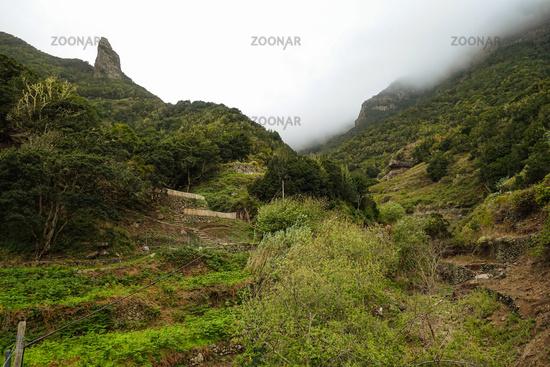 Blick Richtung Lorbeerwald und National Garajonay auf La Gomera - Aufgenommen bei El Cedro