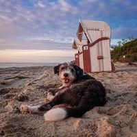 Hund am Strand Schwarzer Busch der Insel Poel