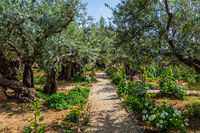 The ancient and well-kept Garden of Gethsemane
