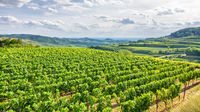 aerial view vineyard scenery at Kaiserstuhl Germany