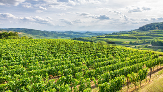 aerial view vineyard scenery at Kaiserstuhl Germany