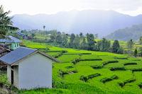 Leben und Wohnen in den Reisterrassen in Flores