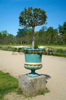 Lorbeerbaum im Schlosspark des Schlosses Charlottenburg