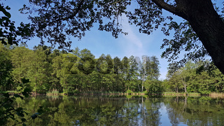Birken und Erlen am Ufer des Briesesee im Frühling