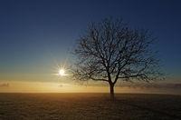 Sonnenaufgang über dem Nebelmeer mit Baum