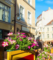 Flowers, old town, Tallinn, Estonia