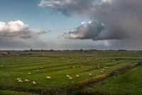 Landschaft mit Salzwiesen bei Westerhever | Landscape with salt marshes near Westerhever