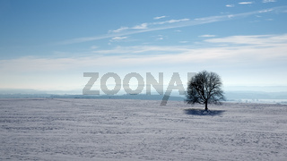 Baumsolist in Winterlandschaft