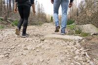 Hexenstieg im Harz