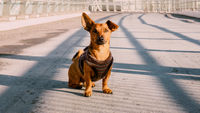 Cute mixed breed dog sitting on the road in autumn or winter. Pet activity and seasonal concept.