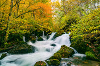 Waterfalls in the Oirase Mountain Stream in colorful foliage of autumn forest at the Oirase Stream Walking Trail in Oirase Valley