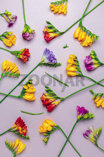 Floral background with multicolored freesias.