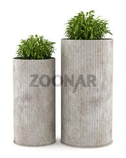 two potted houseplants isolated on white background