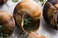 Escargot platter, delicious french delicatessen