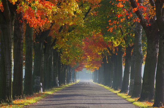 Allee im Herbst - avenue in fall 27