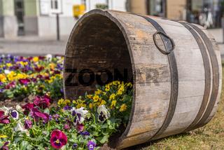 kreative Gartengestaltung mit Stiefmütterchen und Bottich aus Holz