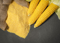 Ripe young sweet corn cob and cornmeal on background