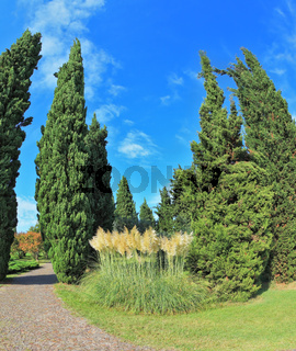 Two slender cypress separated  path