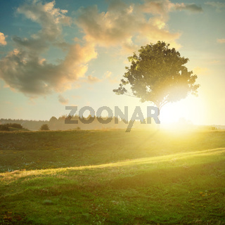 landscape with tree on sunset