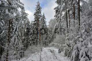 Winter im Naturpark Suedschwarzwald