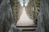 wooden rope bridge