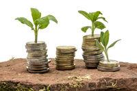 Kleine Pflanzen wachsen aus gestapelten Geld Münzen auf einem Sandstein freigestellt auf weiß
