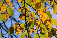 Blick auf herbstlich gefärbte Blätter in der Hansestadt Rostock