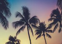 Vibrant Retro Hawaii Sunset Palm Trees