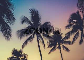 Vibrant Retro Hawaii Sunset Palm Trees