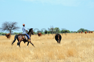 Weidearbeit in Namibia