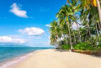 beach and coconut palm trees. Koh Samui