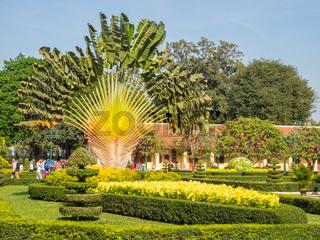 Fan palm tree - Phnom Penh