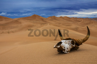 Bull skull in sand desert and storm clouds