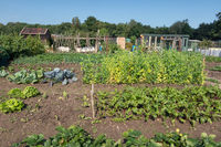 Dutch allotment garden with leek, unions, potatoes and shed