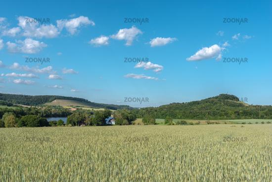 Getreidefeld mit Aalkistensee bei Maulbronn