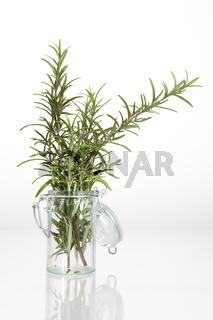 Frischer Rosmarin in Glasbehältnis vor neutral weißem Hintergrund