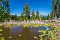 Kleiner Teich bei Voeran, Suedtirol im Fruehling