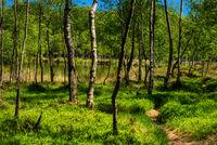 Natur im Kaltenhofer Moor in Schleswig-Holstein in Deutschland