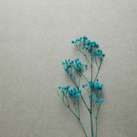 Blue baby's breath, gypsophila dry flowers on gray background. top view, copy space