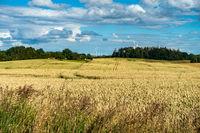 Typische Sommer-Landschaft in Mecklenburg-Vorpommern, Gegend um Bad Doberan, Deutschland