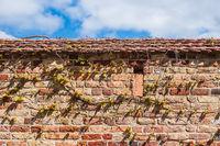 Historische Stadtmauer in der Hansestadt Rostock