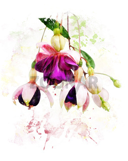 Watercolor Image Of  Fuchsia Flowers