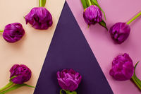 Wonderful tulips with a copyspace on a geometric background