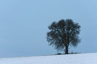 Solitary leaf tree with tree house on field with snow against sky in winter