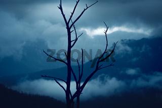 Blue Mountains after bush fires