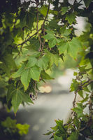 Green tree leaves with defocused car  lights