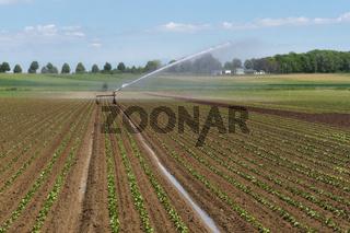 Bewässerung eines Gemüsefeldes, Deutschland
